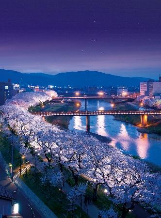 足羽川桜並木(夜) (332x450)