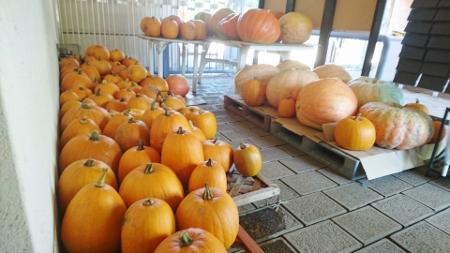 ゲート裏かぼちゃ (450x253)