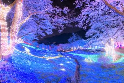 夜桜イルミ (400x267)